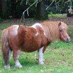 Pony van Boerderij Pret